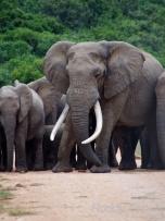 Herd on the road