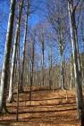 Trees of Omberg 01
