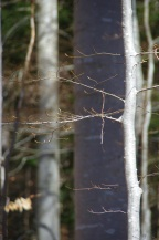 Trees of Omberg 02