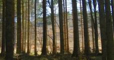 Trees of Omberg 04