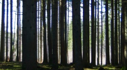 Trees of Omberg 06