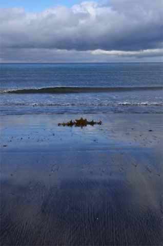 Látravik beach kelp