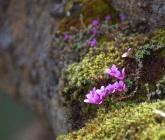 Mt Flowers Glymur