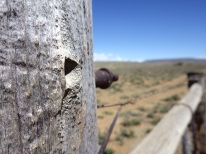 Karoo up close7