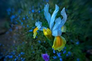 Warton Garden Flower 2