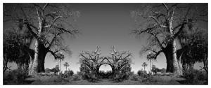 Baobab Temple