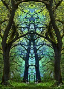 Gnarly Symmetry