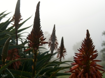 Aloes web 3