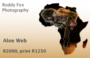 Aloe Web Price