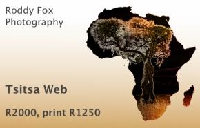 Tsitsa Web Price