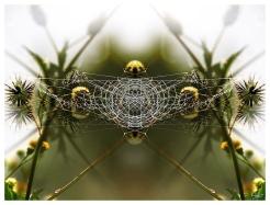 Tsitsa Web