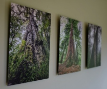 Hogsback Trees