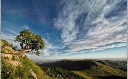 Oldenburgia – Winner of the WESSA Natural Heritage Photo Competition2018