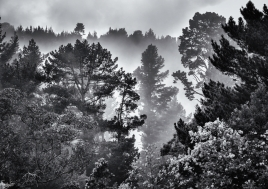 Breathing Trees, Hogsback, Wild Fox Hill, South Africa, #NAF18