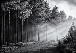 Misty Road, Hogsback, Wild Fox Hill, South Africa, #NAF18