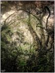 Hogsback, #NAF18, Eastern Cape, Dream Forest Series, Metamorphosis