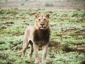 Kwandwe, WESSA, Natural Heritage, RoddytheFox, Wildlife