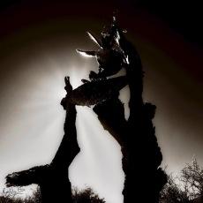 Jointed cactus, Blaauwater Siding, Nieu-Bethesda, Karoo