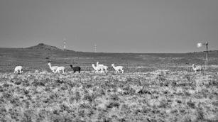 Karoo roadside view, N9, Middelburg, Karoo