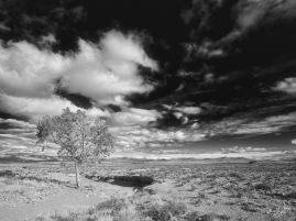 Lone tree, Blaauwater Siding, Nieu-Bethesda, Karoo