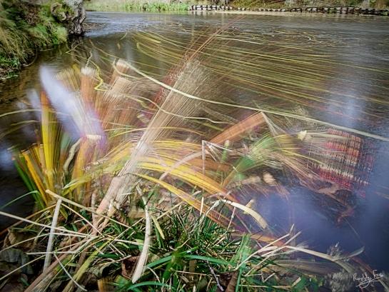 Alstersälven, impression of grasses