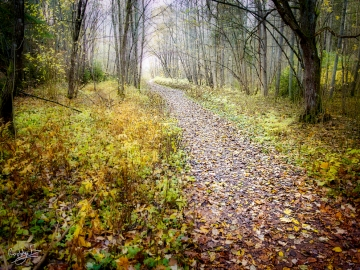 Autumn Pathway at Äsperöd