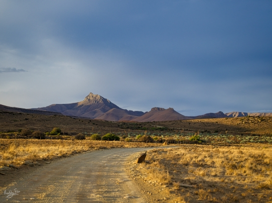 The golden road to Ganora Farm